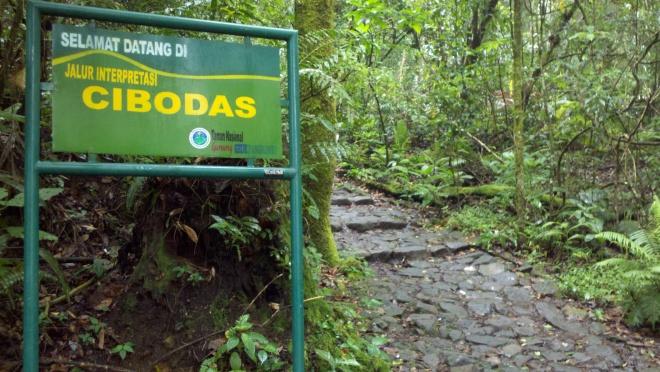 Selamat datang di jalur interpretasi CIBODAS